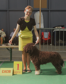 Golden Dog Trophy Liège